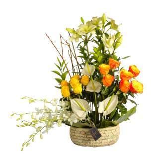 الأصفر والبرتقالي-سالي حلمي - مصر